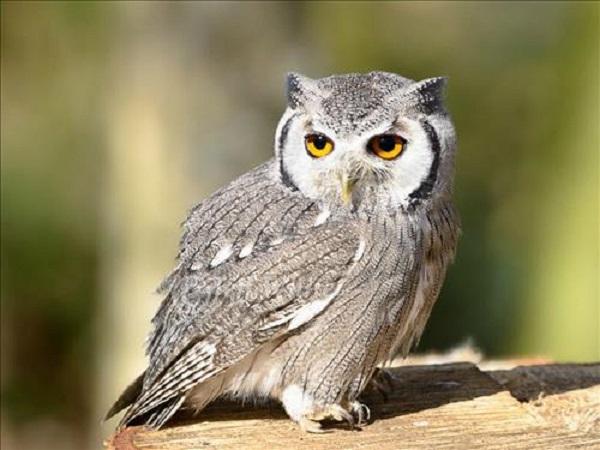 Chim bay vào nhà là điềm báo gì và cách hóa giải?